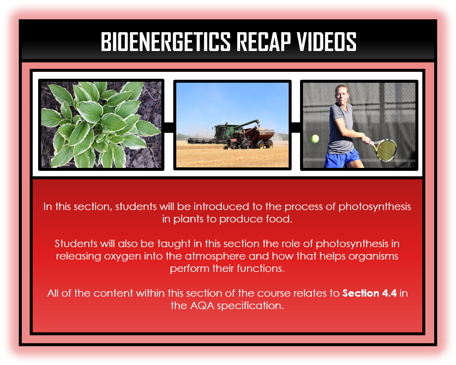 Combined Science Snapshots - Bioenergetics Section